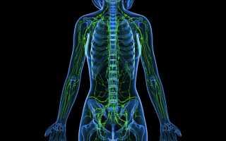 Расположение лимфоузлов у человека