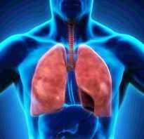 В каком органе происходит газообмен