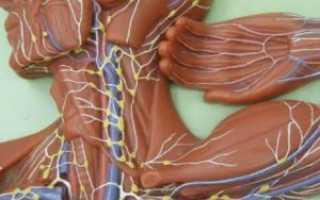 Подмышечные лимфоузлы размеры в норме