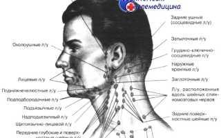 Можно ли нащупать лимфоузлы у здорового человека