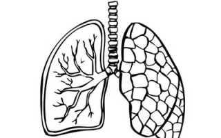 Процесс газообмена в лёгких и тканях