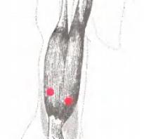 Болит двуглавая мышца плеча