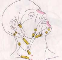 Схема расположения лимфоузлов на лице
