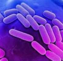 Клебсиеллезная инфекция